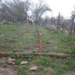 Alte Apfelsorten gepflanzt