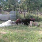 Wilmas neue Freunde